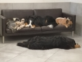 hotel dla psow krakow