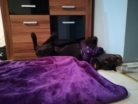 hotel dla psa 9